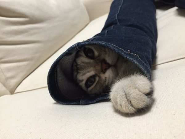 skynnycat_zetsubo3