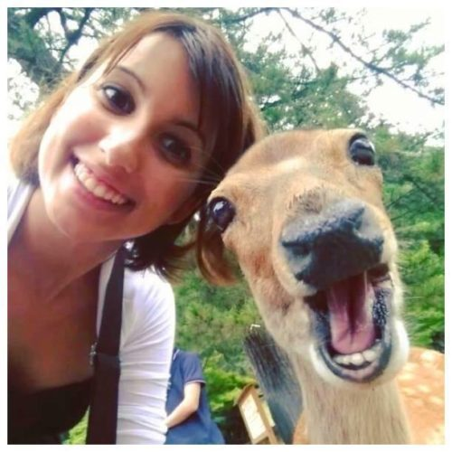 animal_seifie (2)
