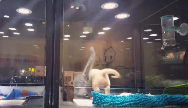 catescapes_tomeetdog6
