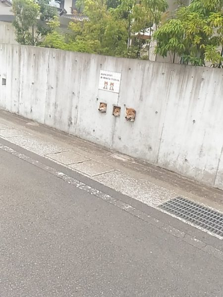 dog_wall (1)