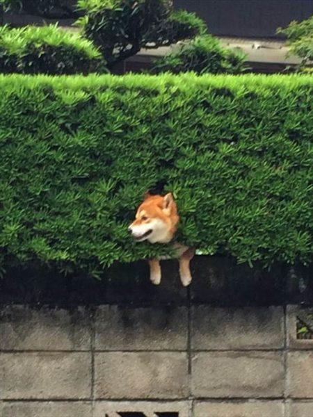 dog_wall (10)