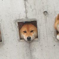 dog_wall