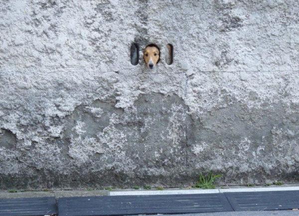 dog_wall (6)