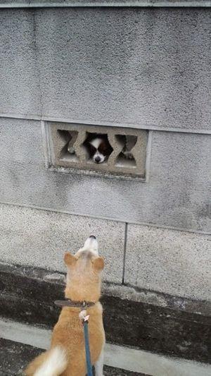 dog_wall (7)