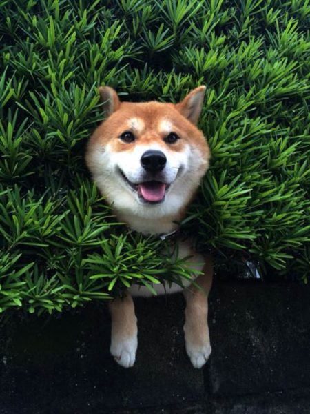 dog_wall (9)