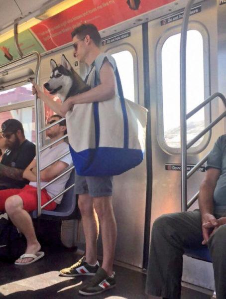 newyork_animal (1)