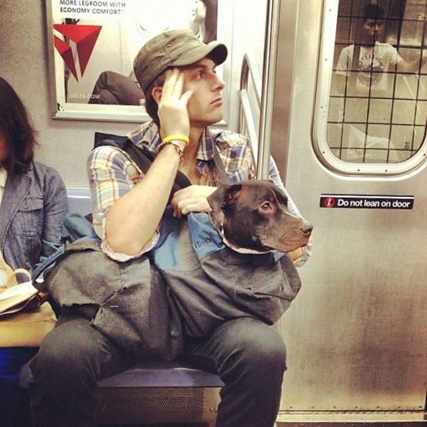 newyork_animal (3)