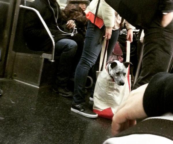 newyork_animal (4)