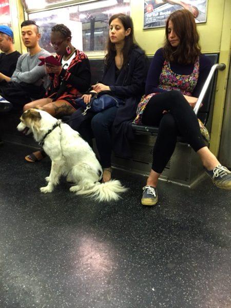 newyork_animal6