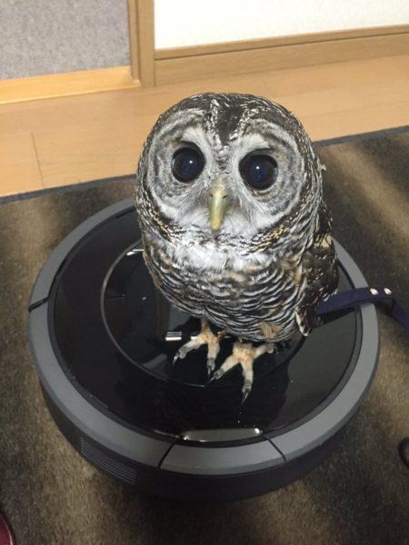 owlbag (10)