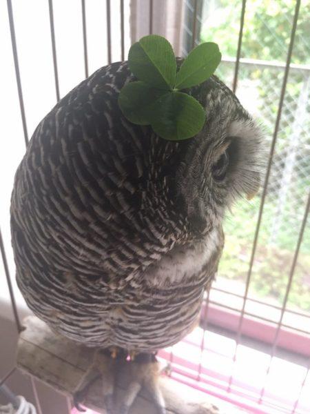 owlbag (12)