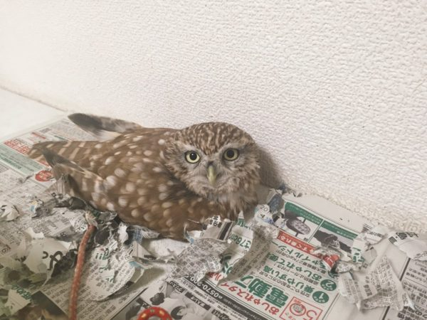 owlbag (6)