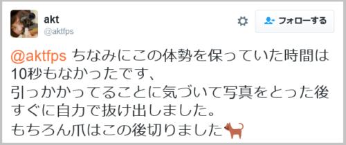 cat_nail (11)