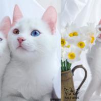 cat_oddeye (11)