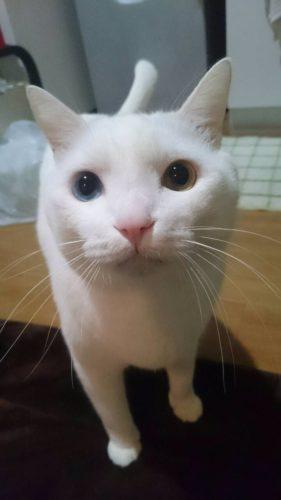 cat_oddeye (16)