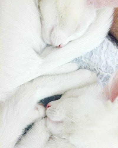 cat_oddeye (2)