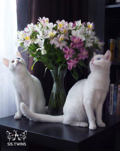 cat_oddeye (4)
