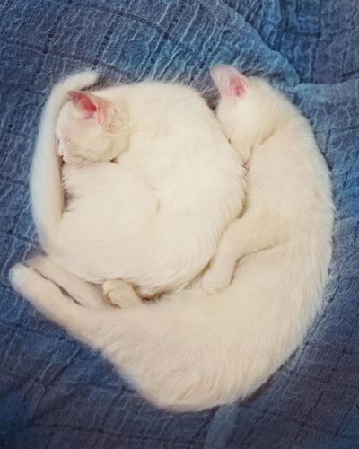 cat_oddeye (5)