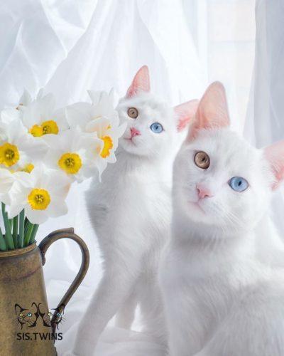 cat_oddeye (6)