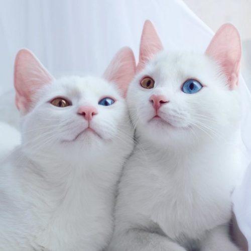 cat_oddeye (7)