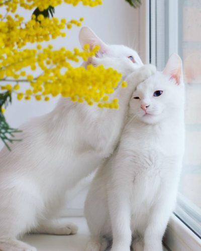 cat_oddeye (8)