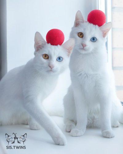 cat_oddeye (9)