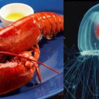 lobster_life (17)