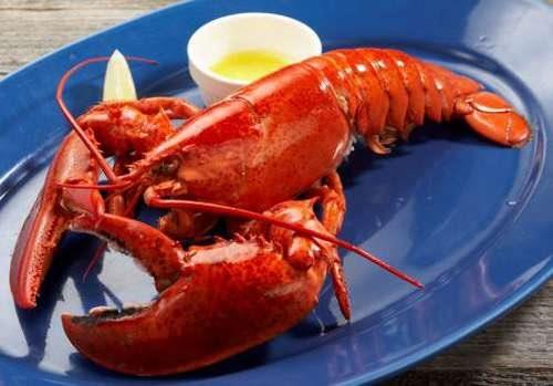 lobster_life (7)