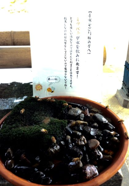 mitsubachi_water (2)