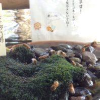 mitsubachi_water (9)