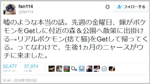 pekemongo_cat (1)