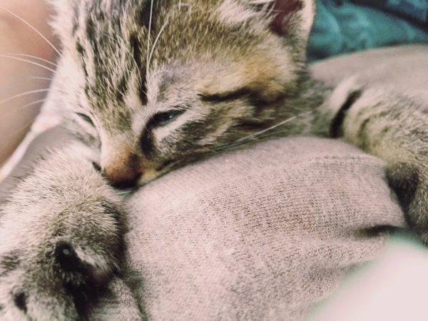 pekemongo_cat (6)