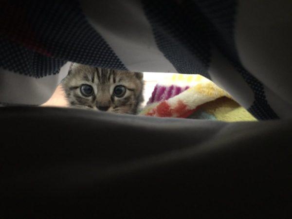 pekemongo_cat (8)