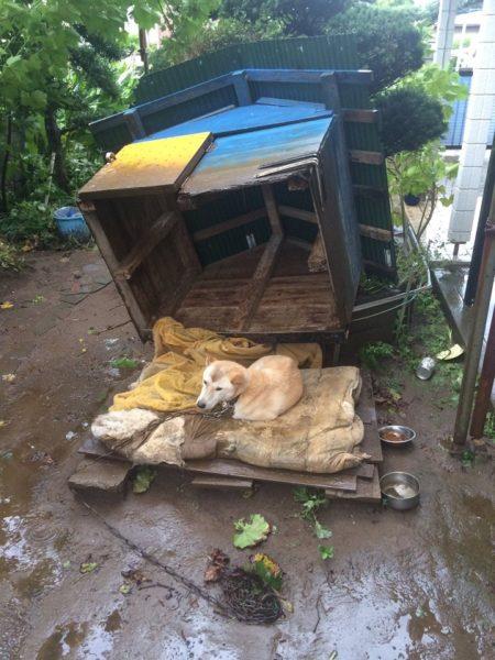 taifuu9_matome (14)