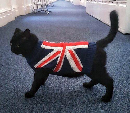 cat_costume-1