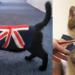 cat_costume-14