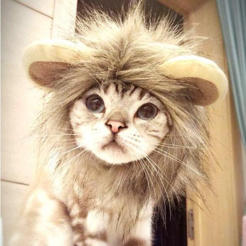 cat_costume-4