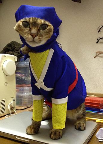 cat_costume-8