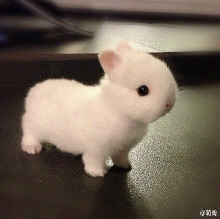 cuteanimals-7