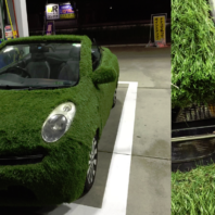 grasscar