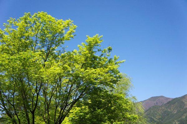 green_light (4)