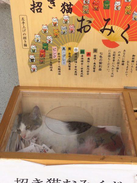 manekineko_omikuji (2)