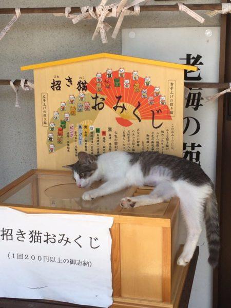 manekineko_omikuji (3)