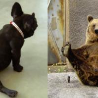 yoga_animal