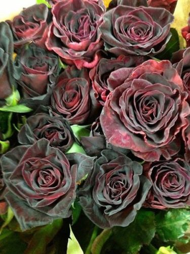black_rose-8