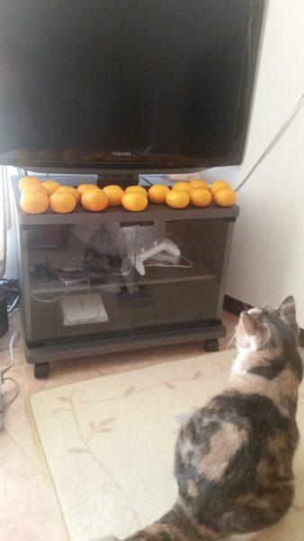 catstation-8