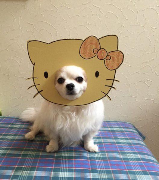 danborudog-12
