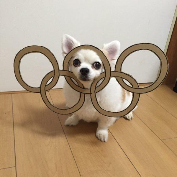 danborudog-14