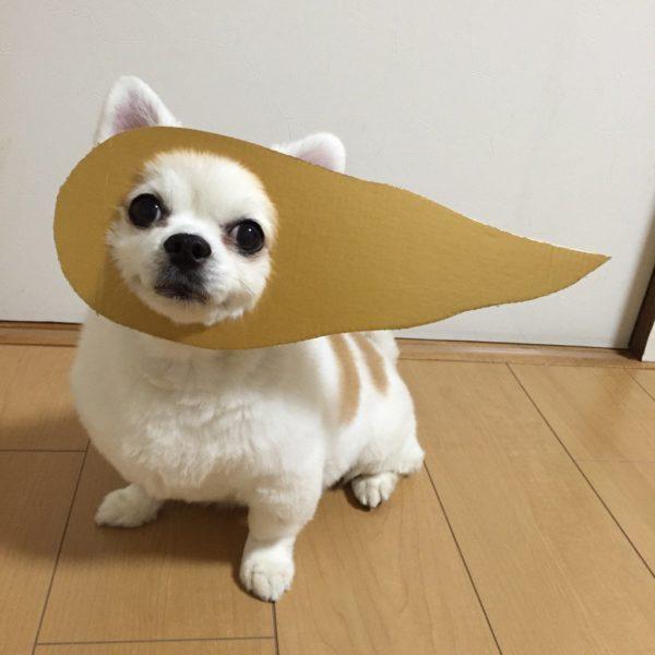danborudog-15