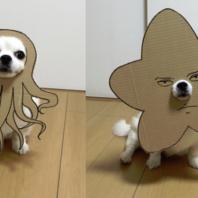 danborudog